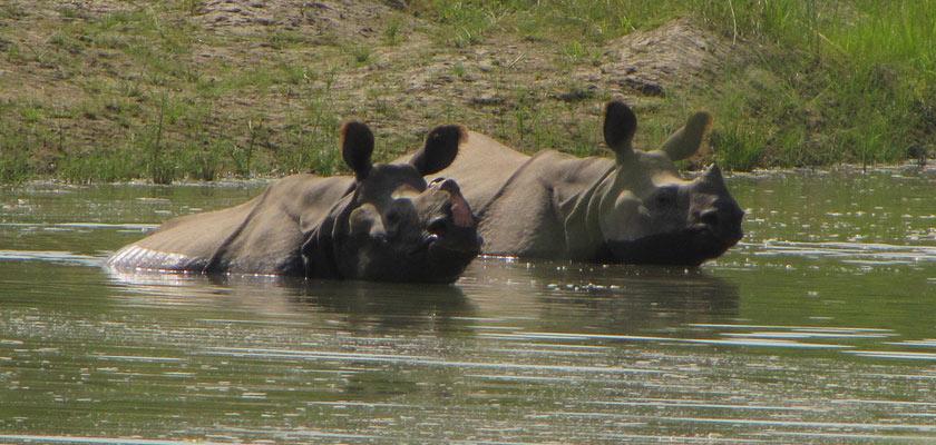 Un safari au Népal