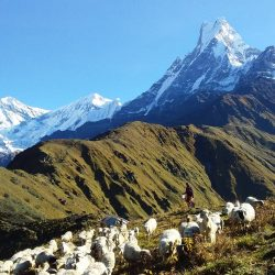 camp de base du Mardi Himal